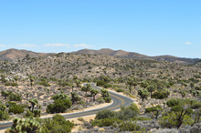 Dead Trees, Yucca Plants And Desert In Joshua Tree National Park, California