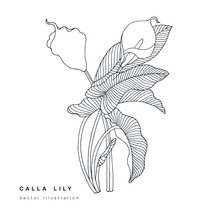 Hand Draw Vector Calla Lily Flowers Illustration. Floral Wreath. Botanical Floral Card On White Background.