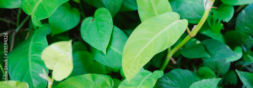 panoramic-organic-green-leafs-banner-for-website