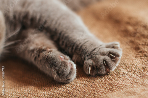 Fotografie, Obraz Paws of a gray cat on an old burlap