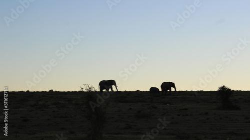 Photo elephant silhouette africa