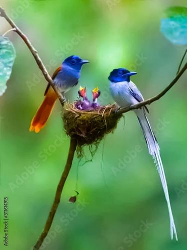 bird on branch Fotomurales