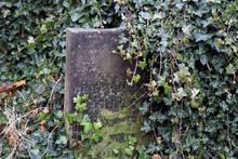 Old Gravestone Being Overgrown...