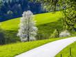 Birnbaum, Blüte, Österreich, NIederösterreich, Mostviertel