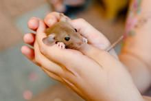 Rats In Hands