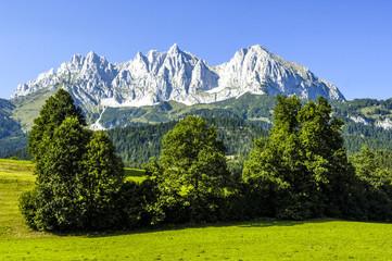 Alpenblick, Feld mit Bäumen, Österreich, Tirol