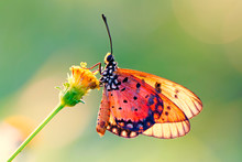 Butterfly On The Flower In Ear...