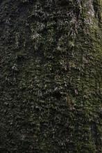 Moss Cover On Tree Bark Backgr...