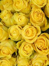 Flower Background Of Yellow Ro...