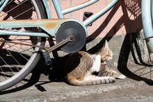 Sleepy Tabby Cat Sleep Under The Sun