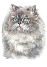 Water Colour Painting Of Himalayan Cat 012