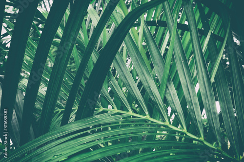 tropical palm leaf, green nature background Wallpaper Mural