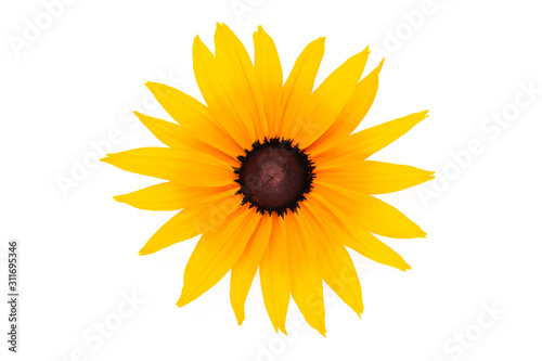 Top view of a perfect blooming flower with yellow petals isolated on a white background in close-up Fototapet