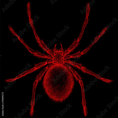 Photo The Vector logo spider for tattoo or T-shirt design or outwear
