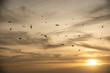 canvas print picture - Sonnenuntergang in der Bretagne