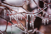 Freezing Rain On The Branches ...