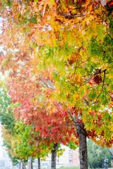 Fototapeta Jesień Abstract autumn tree with colourful leaves.