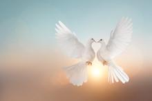 White Pigeons Flying In Heart...