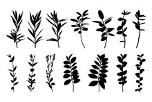 Set Silhouettes Of Tree Branches Isolated On A White Background. Vector Illustration Of Plants