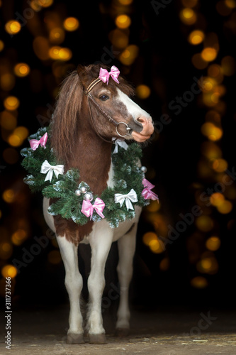 Pony portrait in christmas wreath against christmas lights Canvas