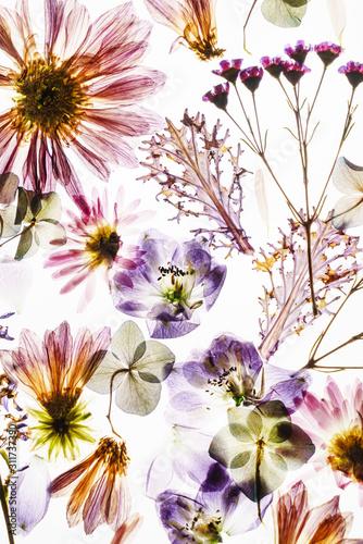 suche-kwiaty-na-bialym-backg