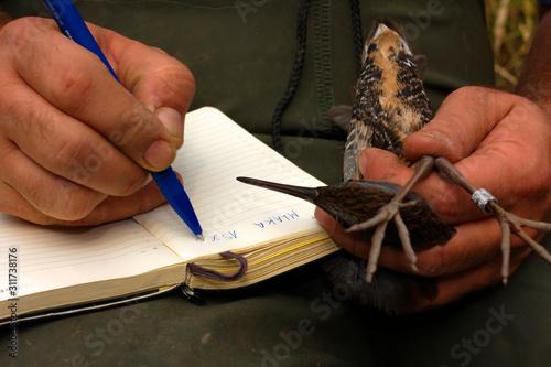 Photo Bird ringing in Crna Mlaka