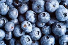 Freshly Picked Fresh Blueberri...