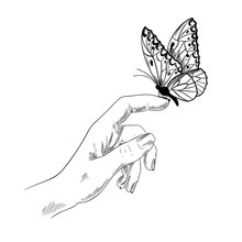 Butterfly On Finger, Girl Hand, Ink Sketch