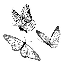 Set Of Three Butterflies, Ink ...