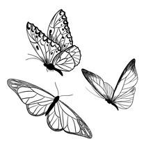 Set Of Three Butterflies, Ink Sketch, Hand Drawn