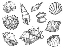 Set Of Isolated Seashell Sketc...