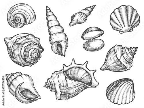 Photo Set of isolated seashell sketches or conch, shell