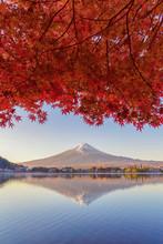 Mountain Fuji With Red Maple Leaves Or Fall Foliage In Colorful Autumn Season Near Fujikawaguchiko, Yamanashi. Five Lakes. Trees In Japan With Blue Sky. Nature Landscape Background