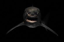 Angry Shark With Sharp Teeth