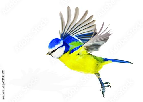 Fotografia Cute bird is flying