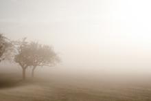 Baum Im Nebel. Trauer Und Einsamkeit Symbol