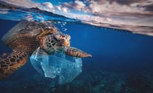 Underwater Animal A Turtle Eat...