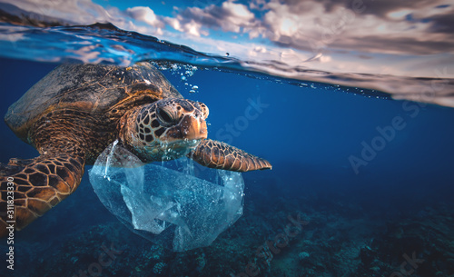 Fotografie, Obraz Underwater animal a turtle eating plastic bag, Water Environmental Pollution Pro