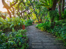 Curve Pattern Of Brown Laterite Walkway In A Tropical Garden, Greenery Fern Plant, Shrub And Bush, Decorate With Orange Pottery Lantern Under Shading Of The Trees, Good Care Maintenance Landscaping