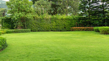 Fresh Green Burmuda Grass Smooth Lawn As A Carpet With Curve Form Of Bush, Trees On The Background, Good Maintenance Lanscapes In A Garden Under Cloudy Sky And Morning Sunlight