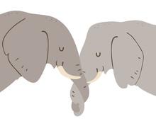 Elephant Entwine Trunks Show A...