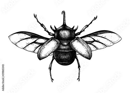 Photographie Hand sketched five-horned rhinoceros beetle