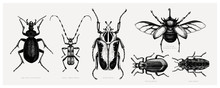 Vector Collection Of High Detailed Insects Sketches. Hand Drawn Beetles Illustrations In Vintage Style. Entomological Drawings Set. Beetles Outlines