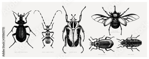 Fotografija Vector collection of high detailed insects sketches