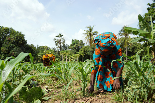 Photo Two African Women In Traditional Dresses Cleaning Up An Extremely Weedy Maize Fi