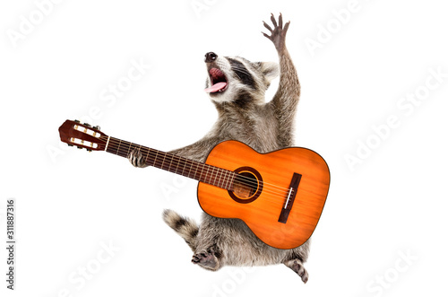 Fototapety, obrazy: Funny singing raccoon with acoustic guitar isolated on white background