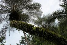 In The Singapore Botanic Gardens (singapore)