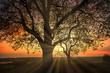 canvas print picture - Magischer Baum am Bodensee