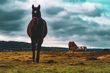 Beautiful Fit Horse On Pasture...