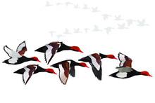 Flying Duck. Realistic Vector ...